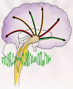 Binaur�ln� rytmy zm�n� �innost mozkov�ch vln